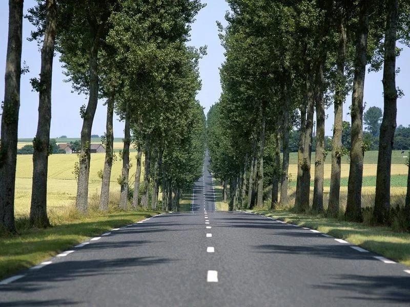 Неменее 6,5 тыс. деревьев высадят встолице осенью